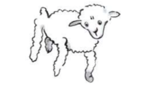 Mouton vieux