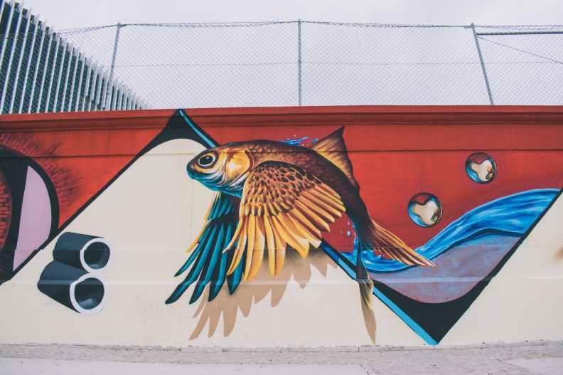 photo of brown blue red and white fish with wings wall painting